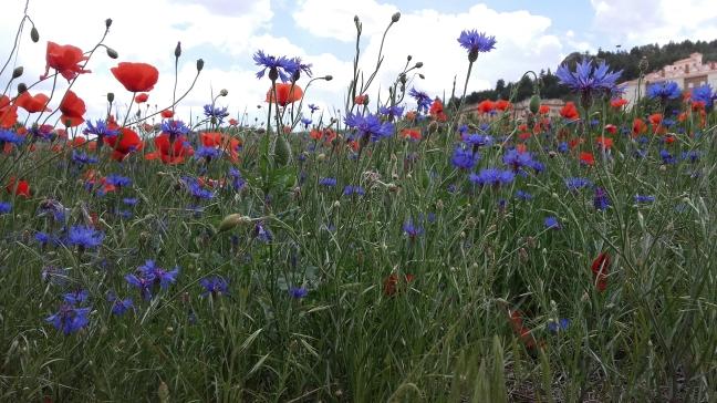 Flores en el campo 1